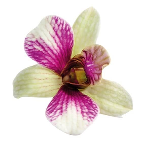 Orchideenblüten Essbar Fr 8stschale Ca20gschale Stroetmann24